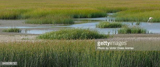 solitary flamingo - victor ovies fotografías e imágenes de stock