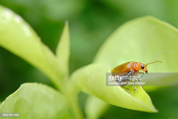 A solitary insect at the edge of a green leaf