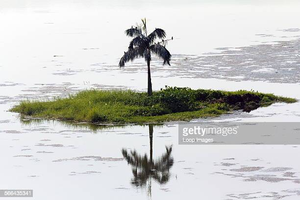 A solitary palm tree on a tiny island Lake Inya in Yangon in Myanmar