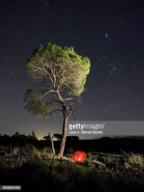 Solitary pine in the mount a night of stars with a red umbrella