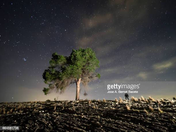 solitary tree and silhouette of an isolated person  on the top of a hill  a night of blue sky with stars - un solo hombre stock photos and pictures