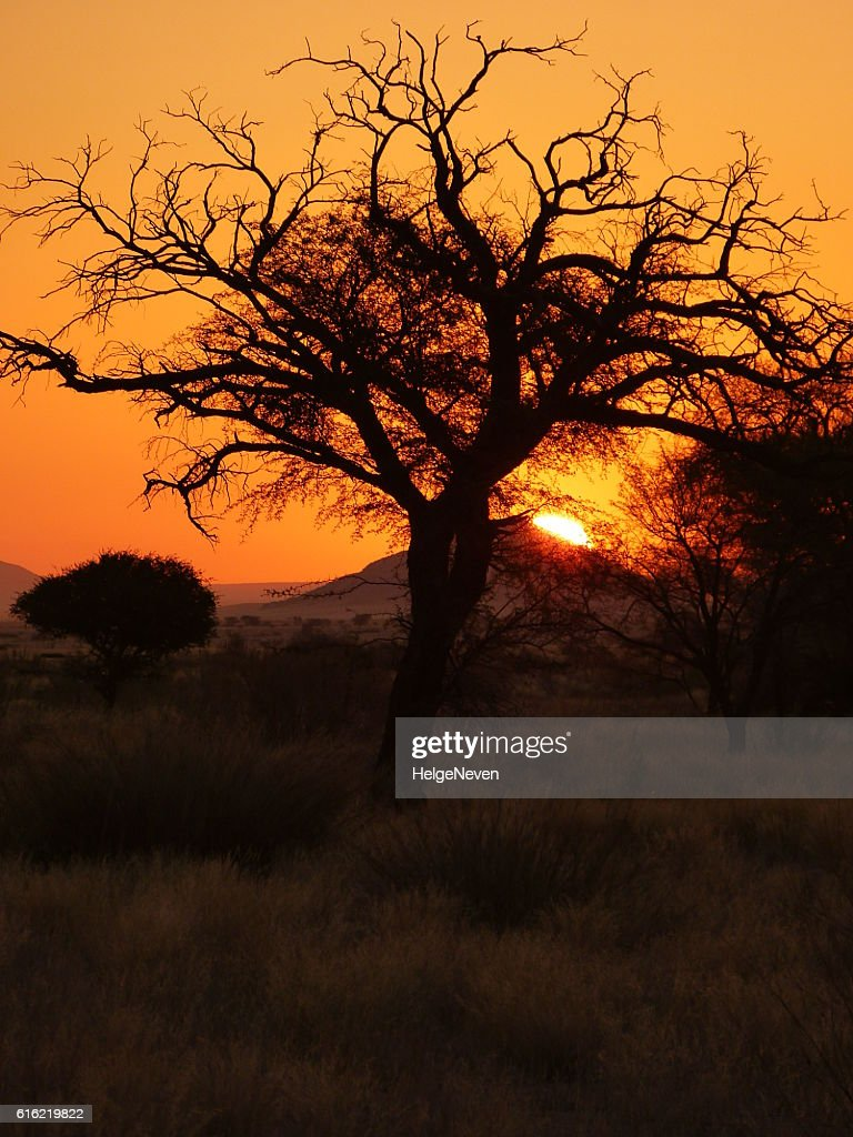 Solitary tree in a spectacular sunset in Solitaire : Stock Photo