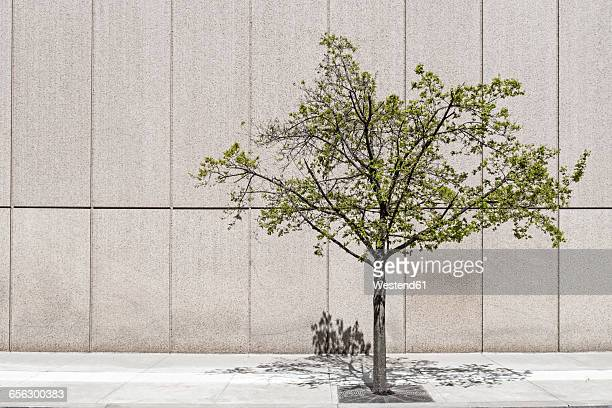 Solitary tree in front of concrete wall