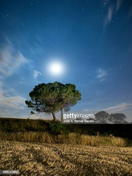 Solitary tree in the mountain in the night, illuminated by the full moon