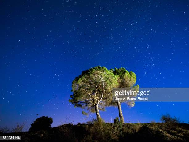 solitary tree on the top of a hill a night of blue sky with stars in movement - cielo stock pictures, royalty-free photos & images