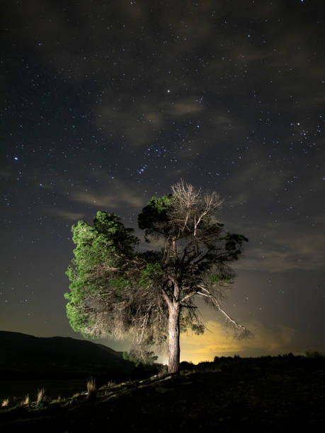 Solitary tree on the top of a hill a night of blue sky with stars in movement