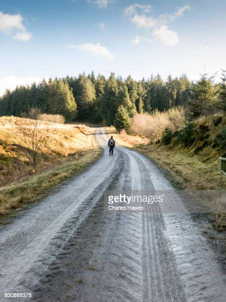 Solitary walker on forest road near Nantymaen Junction, Ceredigion. The Cambrian Way, Wales, UK