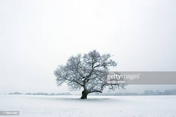 Solitary Winter Tree In Snow