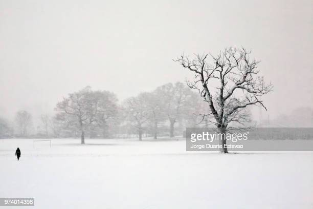 solitude in the snow - jorge duarte estevao stock pictures, royalty-free photos & images