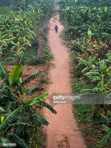 Solitude person walking through banana plantation
