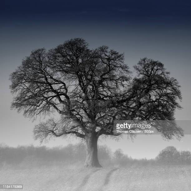 solitude - elm tree stock pictures, royalty-free photos & images