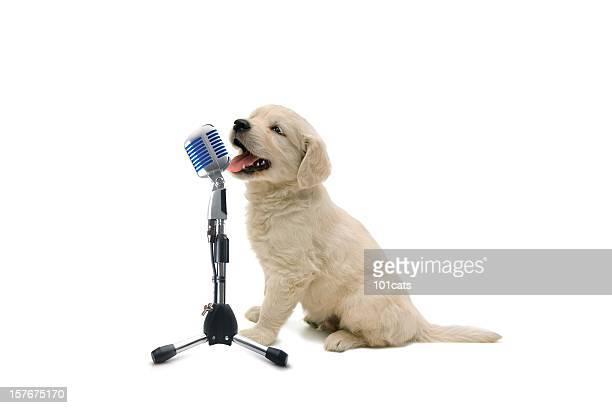 solo concert - one animal stockfoto's en -beelden