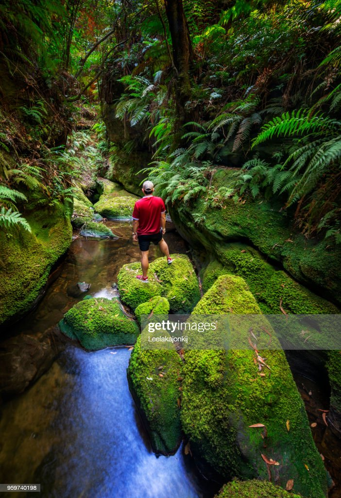 Solo traveler in deep green forest of Blue Mountains national park : Stock-Foto