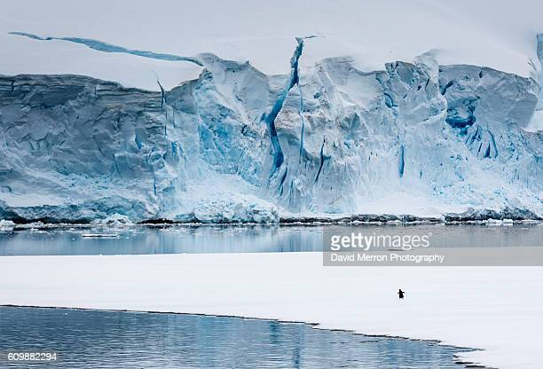 solo walk - antarctique photos et images de collection