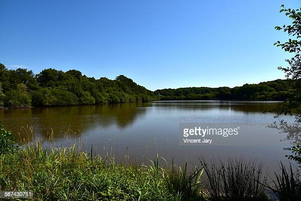sologne pond in france - sologne stock photos and pictures
