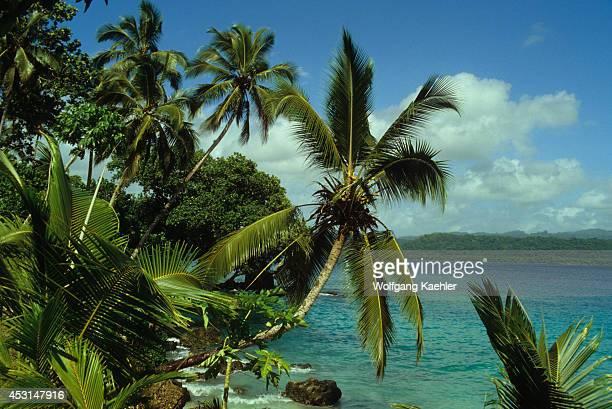 Solomon Islands, Nendo Island, Palm Trees.