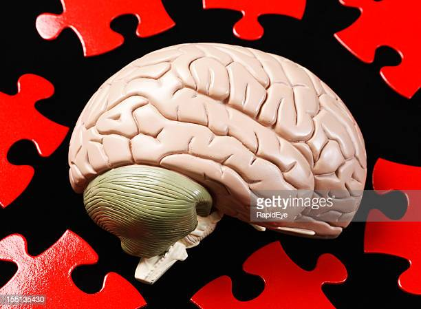 Solving the puzzle of human intelligence: brain model and jigsaw
