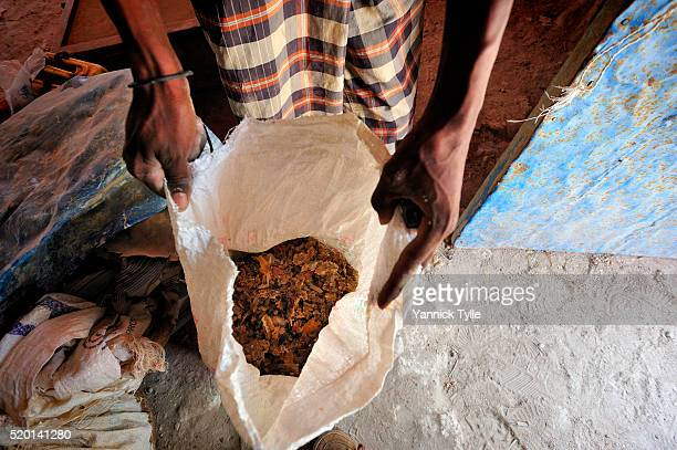 somali dealers for natural resins present frankincense at stores in bosaso, puntland - bosaso stock pictures, royalty-free photos & images