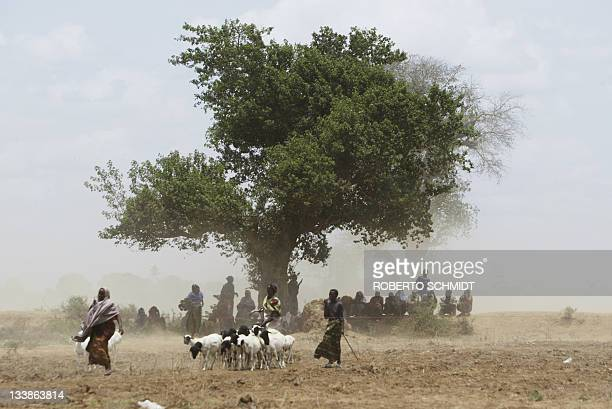 Somali goat herder walks past other Somalis sitting under a tree near a food aid distribution centre for displaced Somalis in the Jowhar Somalia...