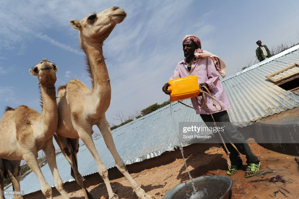 Somali herder Mohamed Abdi Madar pours water for two of his surviving camels at a traditional cistern for harvesting rainwater, called a berkad, made by the Irish charity Concern-Worldwide as the Horn of Africa faces severe drought in Carro-Yaambo, a village 20 miles west of the capital Hargeisa, Somalia, on June 21, 2017. The United Nations and NGOs have sought to raise resilience in pastoralist communities that have seen their lifeblood herds of camels, goats and sheep decimated by up to 80 percent, leaving 6.7 million people in need of assistance to avoid famine in Somalia and Somaliland.