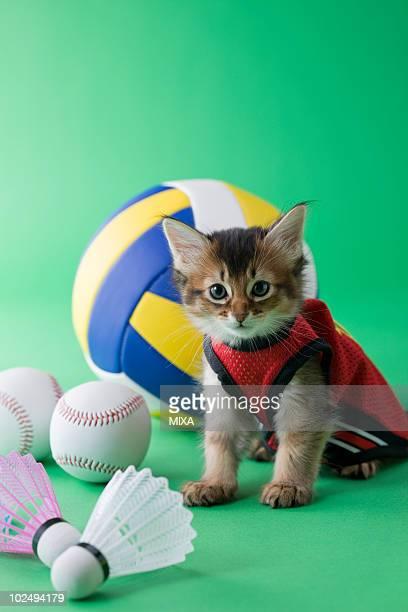 Somali Kitten and Sports