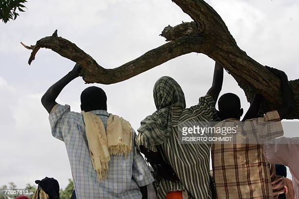 AUSEILL Somali men look from under a tree at food aid being given out at a food distribution point by the United Nations World Food Program to...