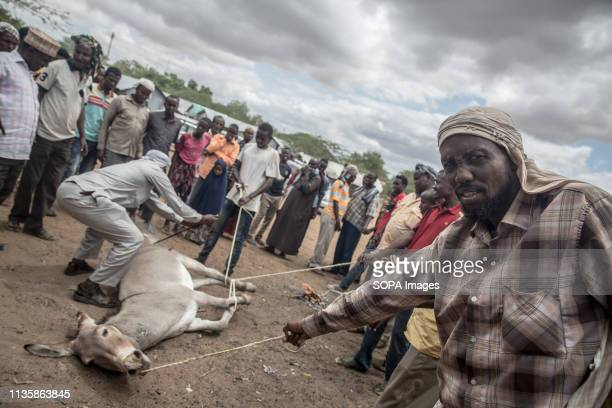 Somali refugees seen branding a donkey in the refugee camp. Dadaab is one of the largest refugee camps in the world. More than 200,000 refugees live...