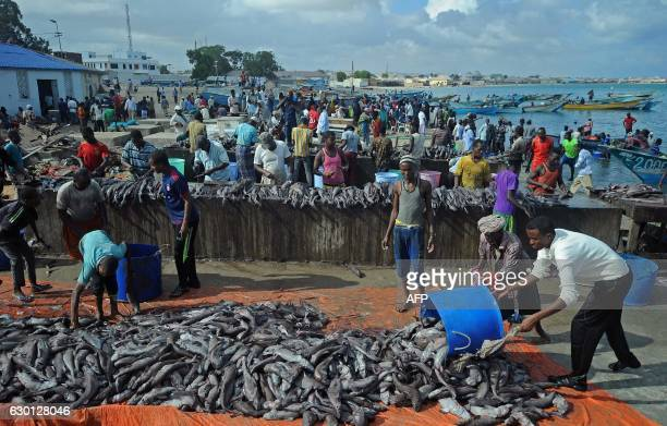 Somali vendors offload a catch from fishing boats at Bosaso beach in Puntland northeastern Somalia on December 17 2016 Fishermen bring fish to the...