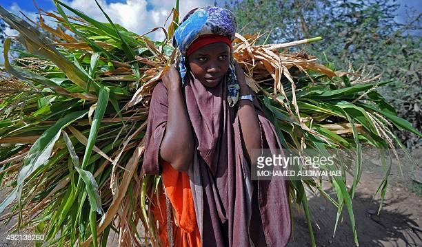 A Somali woman carries goods for sale in Jowhar some 90 kilometers north of the Somali capital Mogadishu on October 10 2015 AFP PHOTO / MOHAMED...
