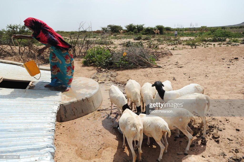 A Somali woman waters her goats at a traditional cistern for harvesting rainwater, called a berkad, made by the Irish charity Concern-Worldwide as the Horn of Africa faces severe drought in Carro-Yaambo, a village 20 miles west of the capital Hargeisa, Somalia, on June 21, 2017. The United Nations and NGOs have sought to raise resilience in pastoralist communities that have seen their lifeblood herds of camels, goats and sheep decimated by up to 80 percent, leaving 6.7 million people in need of assistance to avoid famine in Somalia and Somaliland.