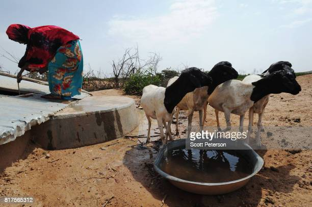 Somali woman waters her goats at a traditional cistern for harvesting rainwater called a berkad made by the Irish charity ConcernWorldwide as the...