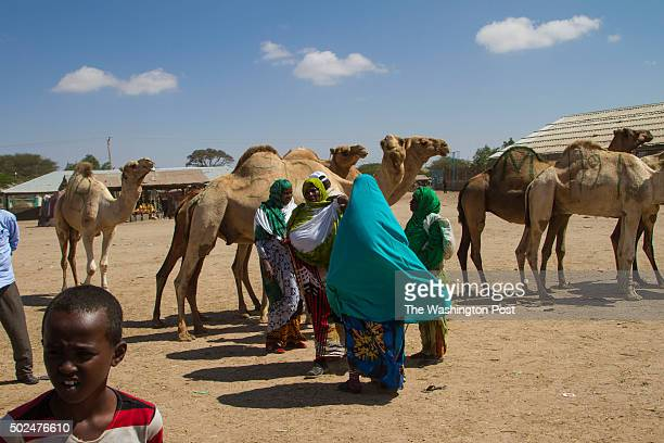 Livestock traders chat together in front of a row of camels in the livestock market of Hargeisa the capital of the Somaliland autonomous region of...