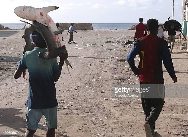 Somalian fisherman carries hammerhead sharks on his head from the port to the fish market on the eastern Curubo beach of Somalian capital city...