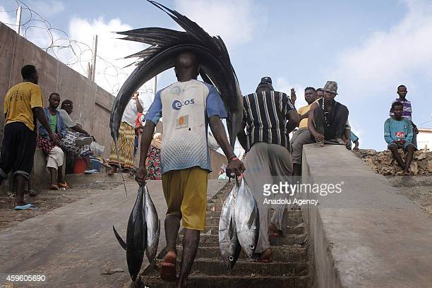 Somalian fisherman carries swordfish on his head and tuna fish in his hands from the port to the fish market on the eastern Curubo beach of Somalian...