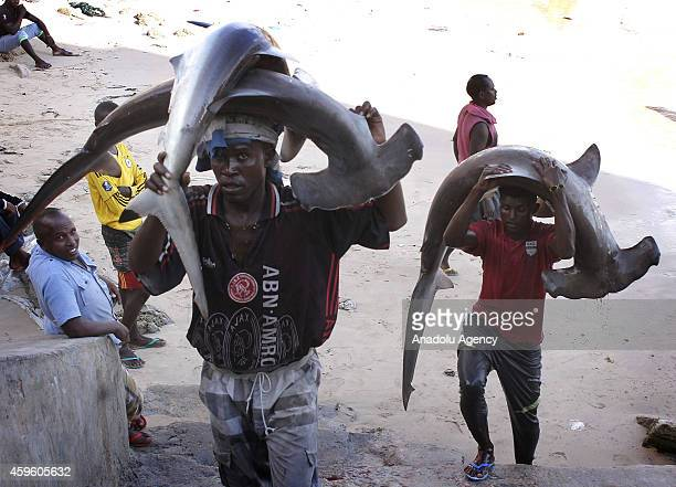 Somalian fishermen carry hammerhead sharks on their heads from the port to the fish market on the eastern Curubo beach of Somalian capital city...