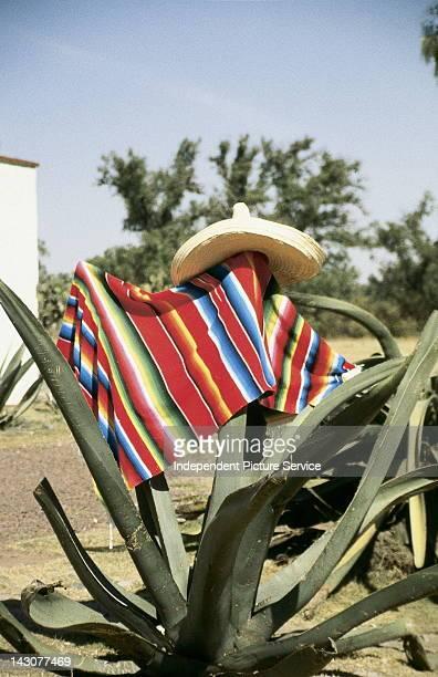 Sombrero and serape on a cactus, Mexico City, Mexico.