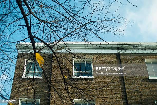 some branches and a house - josemanuelerre fotografías e imágenes de stock