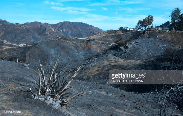 Some canyon homes were left untouched amid the surrounding charred and blackened hillsides from the Woolsey Fire along Lobo Canyon Road in Agoura...