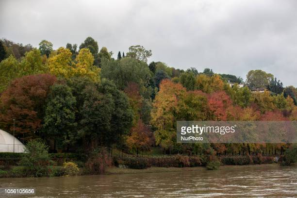 Some colorful autumnal trees next to the Po river Impressions of the Fall in the capital of Piedmont Turin in Northern Italy on 1st November 2018