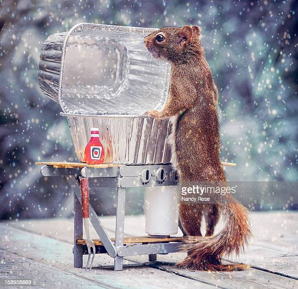 some folks will barbecue in any weather! - american red squirrel stock photos and pictures