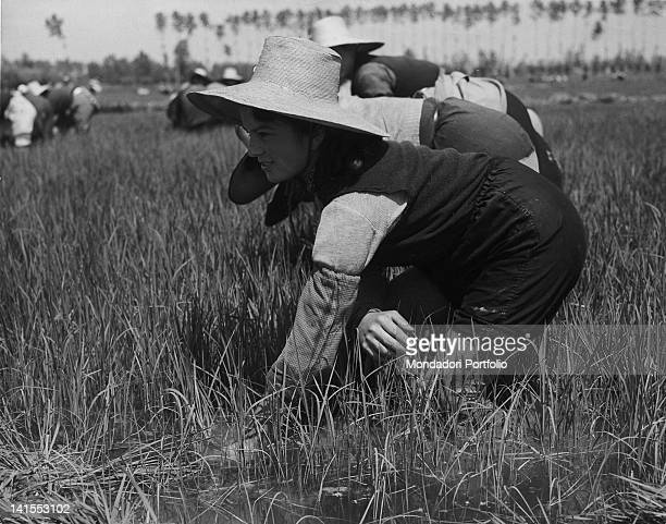 Some Italian rice weeders working in a paddy field Italy 1950s