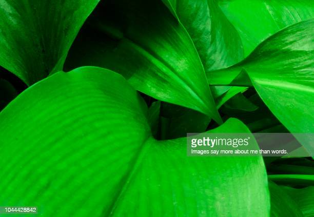 some leaves forming a beautiful pattern. - chlorophyll stock pictures, royalty-free photos & images