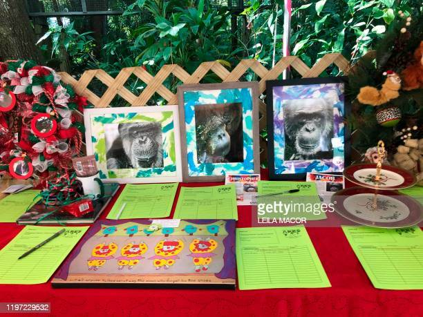 Some of the ape art created by the orangutans and chimpanzees that live in the Center For Great Apes a nonprofit sanctuary in Wauchula Florida sold...