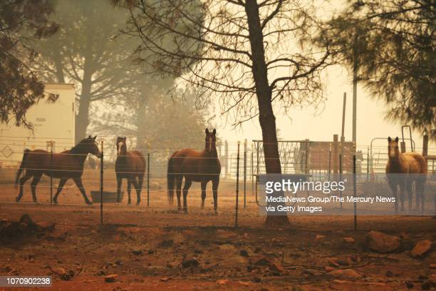 Some of the horses who survived the Camp Fire stand in the corral of the Fallon's family property on Edgewood Lane in Paradise Calif on Friday Nov 9...