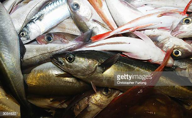 Some of the marketable white fish and other species caught by the crew of the trawler Carina some 70 miles off the North coast of Scotland in The...