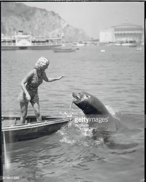 Some politicians smoke cigars but Oscar the Sea Lion smokes herring and here he is popping out of the water at Catalina Island California beseeching...