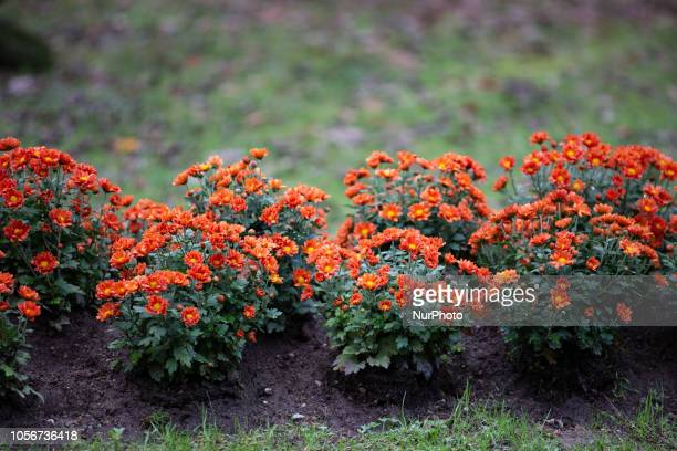 Some red orange yellow flowers is seen in the capital of Piedmont in Northern Italy