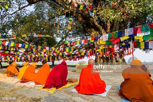 Some Sadhus holy men are sitting around the Bodhi tree next to the Mayadevi Temple the birthplace of Siddhartha Gautama the present Buddha