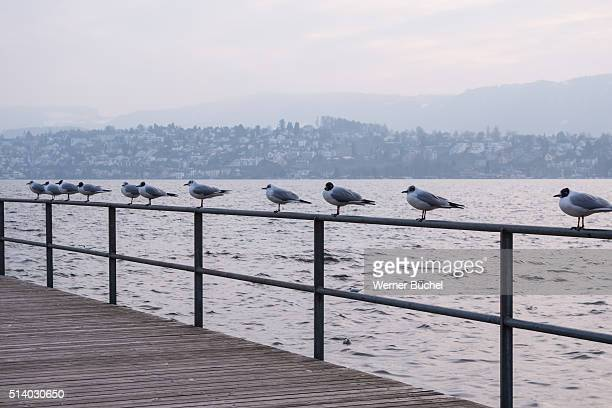Some Seagulls sitting and waiting for Spring