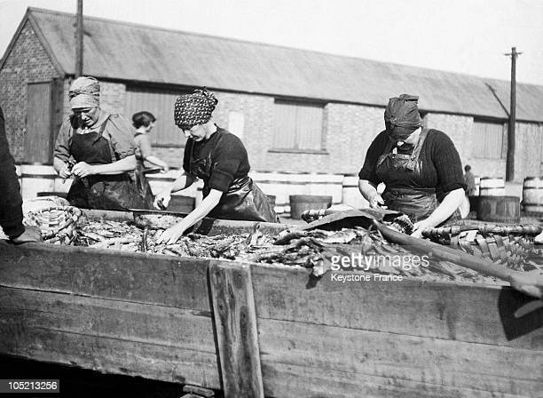 Some Women Gutting Kippers To Be Exported In Lowesoft Harbour In The East Of England In The 30'S